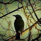 The Birds - Calendar by Kitsmumma