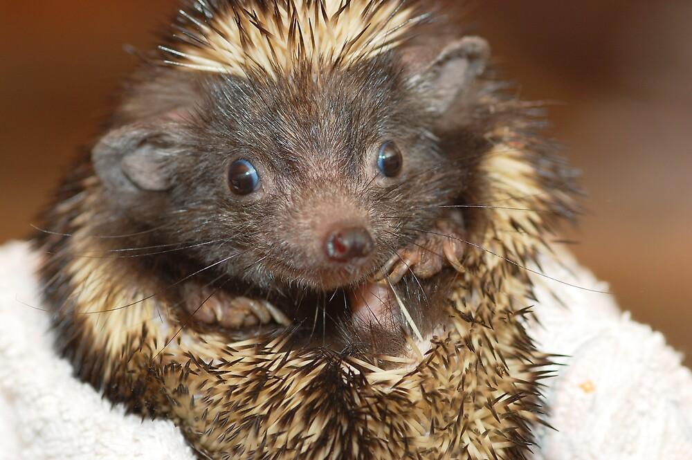 Hedgehog with Big Ears by Richard Heeks