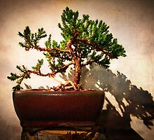 Windswept Juniper Bonsai by SRowe Art