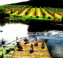 The Amazing Taste Of A Winery Tasting by Lissandra Leite