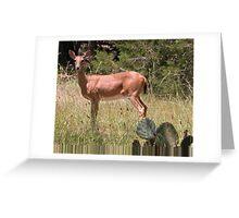 White Tailed Deer Greeting Card