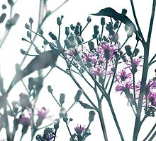 Vernonia by SRowe Art