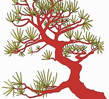 Red Pine Bonsai (White Background)  by sprucetree