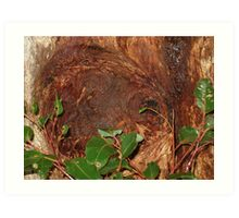 Trunk Of An Ancient Red Tingle Tree Art Print