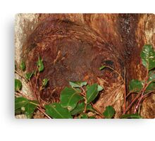 Trunk Of An Ancient Red Tingle Tree Canvas Print
