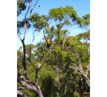 Golden Orb Weaver Spider Photographic Print