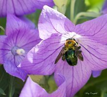 Bee's Purple Passion by Mary Campbell