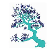 Turquoise Pine Bonsai by sprucetree