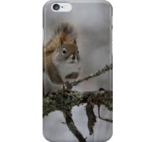 The Elusive Red Squirrel iPhone Case/Skin