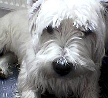 casper the dog by christinawalker