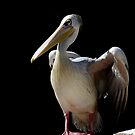 "Bird""s by Sorin  Reck"