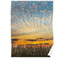 Harvest Sunset Poster