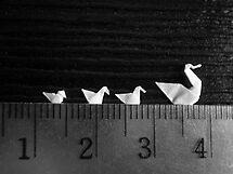 3cm Family Swim by Mui-Ling Teh