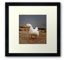 Youthful Duck Framed Print