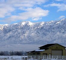 Winter Morning in Farr West, Utah by Jan  Tribe