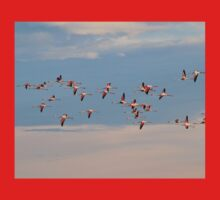 Greater Flamingo - Flying Colors Baby Tee