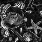 Sea Life Still Life by rogerlloyd