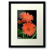 Orange Four Framed Print