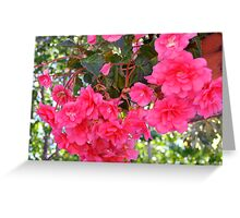 Begonia Enchantment Greeting Card