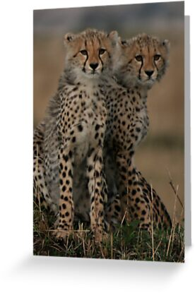 Cheetah Brothers    by Steve Bulford
