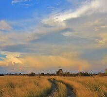 Two Track Road to Rainbow Bliss by LivingWild