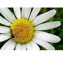 He Loves Me, He Loves Me Not... Photographic Print