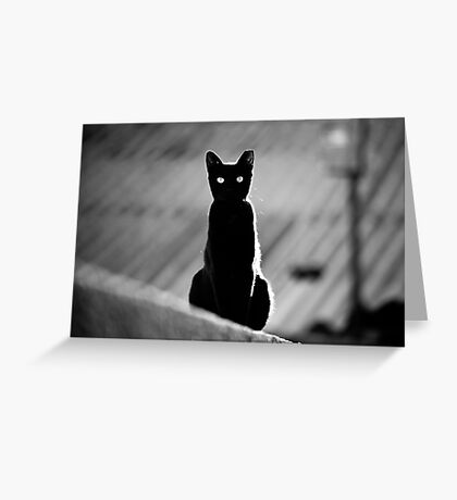 place in the sun for a black cat Greeting Card