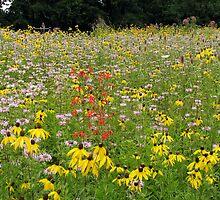 Field of Flowers by Stevesphotoz