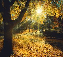 The Last Weekend of Calming Yellow Autumn by va103