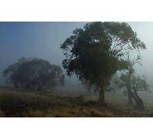 Misty Paddock Photographic Print