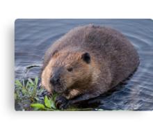 Beaver Shot Canvas Print