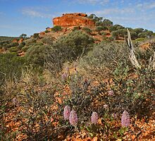 Mount Everard with Wildflowers by Blue Gum Pictures