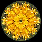 yellow crocus mandala by SarahTrangmar