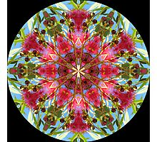 mandala of red gum flowers Photographic Print