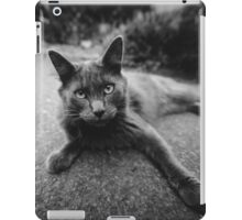 Gray Cat on Washington Sidewalk; Hello Stranger iPad Case/Skin