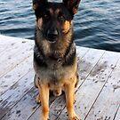 Deutscher Schäferhund - German Shepherd 'Bruno' | Center Moriches, New York by © Sophie W. Smith