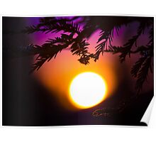 Californian Sunset: roof tops and pine trees Poster