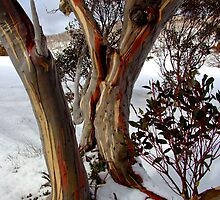 colourful snow gums by LenitaB