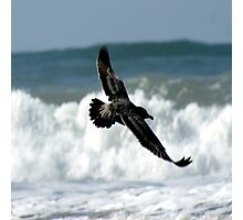 Spread your wings; So. Morro Bay, California, USA  Photographic Print