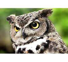 Merlin - Great-Horned Owl Photographic Print