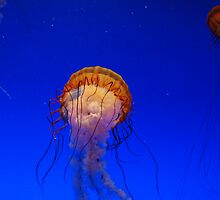 The dance of the Jellies by trwphotography