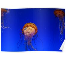 The dance of the Jellies Poster