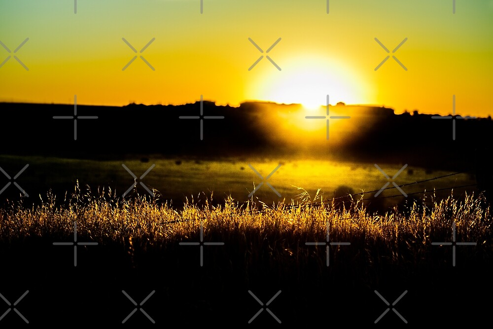 Yellow sunset behind barbed wire by va103