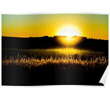 Yellow sunset behind barbed wire Poster