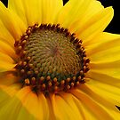 Yellow by Nikki Collier