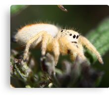 Spider HeadLights Canvas Print