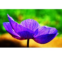 Simple Summer Beauty Photographic Print