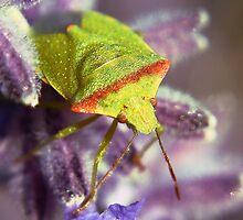 The Green bug by SB  Sullivan