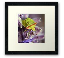 The Green bug Framed Print