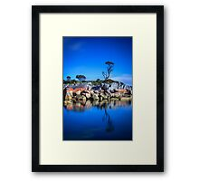 Lonely Tree - Bay of Fires Framed Print